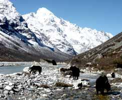 Nepal Travel Package