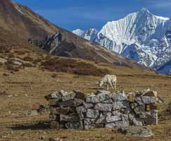 Holiday Package Nepal